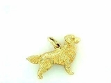 Golden Retriever C039Y