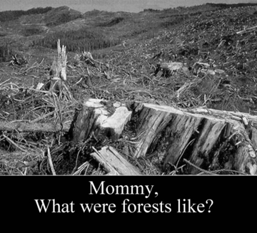 Forests? T-Shirts