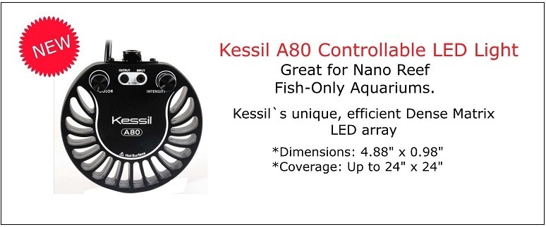 Kessil A80 LED Lighting
