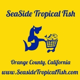 """<font color=red size=""""4""""><u>Now You are Entering Our Saltywater Live Store!<br>www.seasidetropicalfish.com</font>"""
