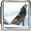 Wolf Howling Photo Italian Charm