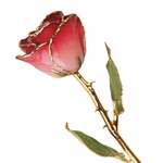 24K Gold Lacquer Real Red And White Rose