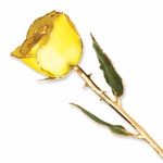 24K Gold Lacquer Real Yellow Rose