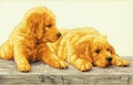 Cross Stitch Kit Golden Retriever Puppies From Dimensions