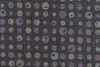 Contrasting Dots on Black: Light Weight Cotton Dobby (1/2 yd)