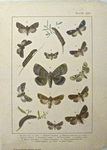 British and European Butterflies and Moths