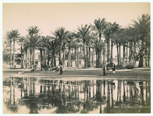 Palms in Cairo