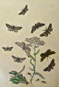 Untitled (Catapillars and Moths)