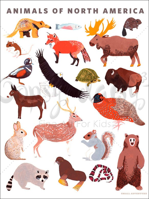 Hobo Rugs Animals of North America Poster Wall Decal by Oopsy Daisy