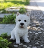 "12"" White Terrier Dog Sitting ""Ultra-Realistic"""