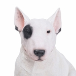 "16"" Bull Terrier Statue ""Ultra-Realistic"""