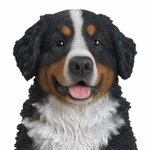 "21.5"" Bernese Mountain Dog Sitting ""Ultra-Realistic"""
