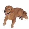 "25"" Golden Retriever Lying Down ""Ultra-Realistic"""