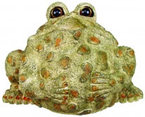 Extra Large Buddha Toad - Light Natural - Click to enlarge