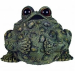 Extra Large Buddha Toad - Dark Natural