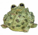 Extra Large Dreamer Toad - Light Natural
