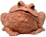 Extra Large Toad - Coffee