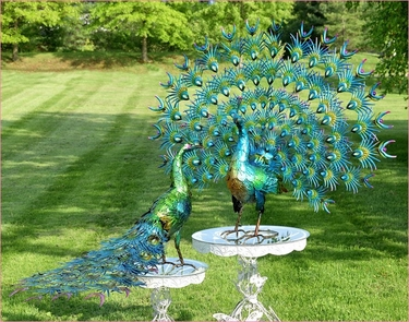 Large Peacocks W Colorful Feathers Set Of 2 Only 1 199