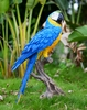 Large Macaw Statue - Blue/Yellow