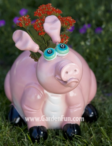 Large Pig Phatzo Planter - Click to enlarge