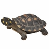 "Large Spotted Turtle ""Ultra-Realistic"""