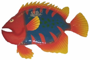 Large Tiger Big Eye Fish Decor - Click to enlarge