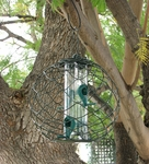 Mixed Seed Globe Feeder