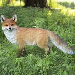 "Walking Fox Statue ""Ultra-Realistic"""
