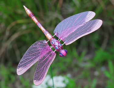Lovely Windy Wings Dragonfly Garden Stakes (Set Of 6) Only $23.99 At Garden Fun