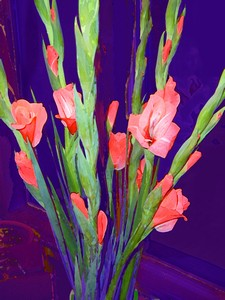 Coral Glads Print