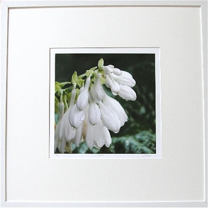 Robin Rowe Cottage Floral Prints