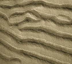 Sand Ripples 1 Giclee