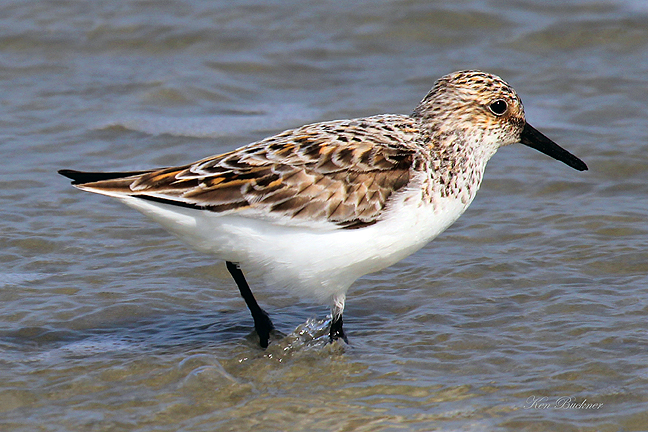 Sandpiper Wadinggiclee For Sale Cottage Amp Bungalow