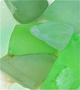 Sea Glass Green Giclee