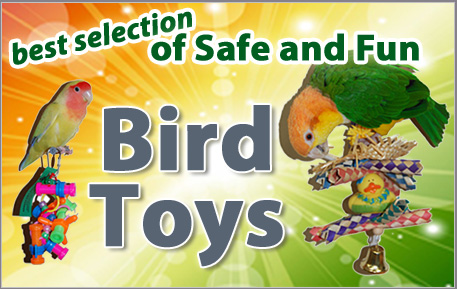 best birds toys available