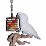 Foraging Bird Toys