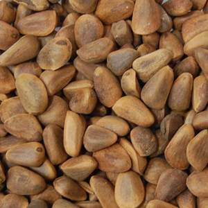 Pine Nuts Bird Food 5lb