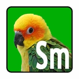 Small Parrot Bird Toys (Conures)