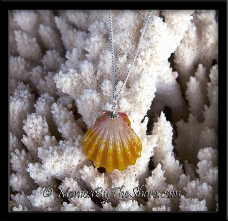 Classic Pink & Yellow Hawaiian Sunrise Shell on Sterling Silver Curb Chain Necklace