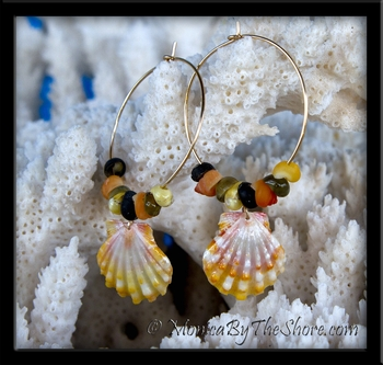 Colorful Hawaiian Sunrise Shell & Tahitian Mongo Shells Gold Hoop Earrings
