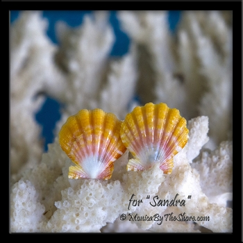Custom Baby Hawaiian Sunrise Shell Post Earrings