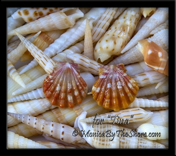 "Custom Orange Hawaiian Sunrise Shell Gold Post Earrings for ""Tina"""