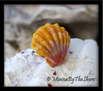 Classic Sunrise Shell Sterling Silver Ring