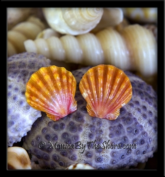 Deep Peach Hawaiian Sunrise Shells Sterling Silver Post Earrings