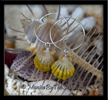 Double Pair Green & Gold Hawaiian Sunrise Shells Silver Hoop Earrings_SOLD250
