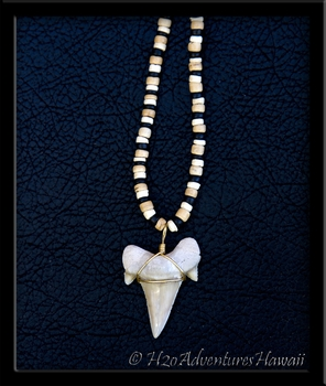 Extinct Otodus Shark Tooth Extra Large on Coco Bead Necklace