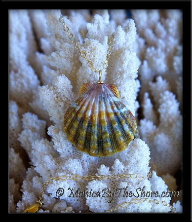 """Extra Large Rare """"Rootbeer"""" Hawaiian Sunrise Shell Gold Chain Necklace"""