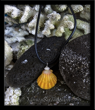 """Haleiwa Hardware"" Jumbo Hawaiian Sunrise Shell & Puka Shell on Rolled Black Leather Necklace"