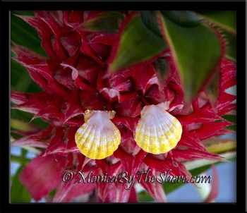 Lemon Yellow & Bright White Sunrise Shell Post Earrings