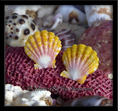 Pink Yellow & White Sunrise Shells Post Sterling Silver Earings